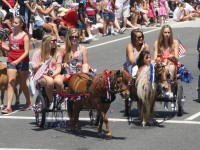 Huntington Beach Parade - Miniature Horses